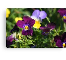 Playful Pansies Canvas Print