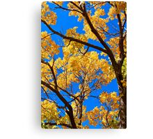Autumn Tree Designs Canvas Print