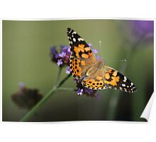 Butterfly on Purple Poster