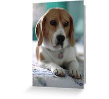 A Flash Portrait Greeting Card