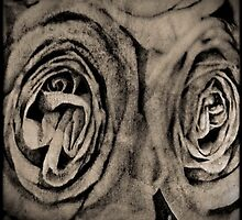 Vintage Roses by Annie Lemay  Photography