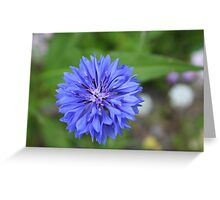 Blue Wildflower Greeting Card