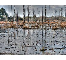 Alabama Swamp Photographic Print