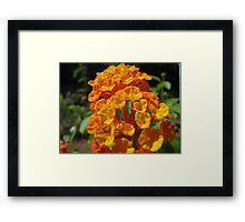 Flower close-up (2) Framed Print