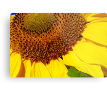 cheery sunflower close up Metal Print