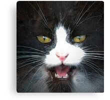 Growl Or Meow Canvas Print