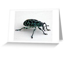 Bug- Botany Bay Diamond Weevil  Greeting Card