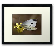 Spotted Butterfly Framed Print