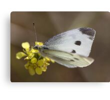 Spotted Butterfly Metal Print