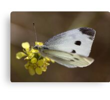 Spotted Butterfly Canvas Print
