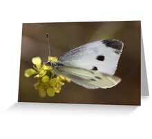 Spotted Butterfly Greeting Card