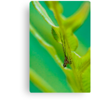 Leafhopper Nymph I Canvas Print