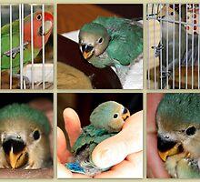 Birdie, Ralphie, and Tuffie Lovebird by AuntDot