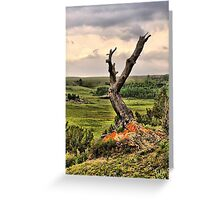 Old Limber Pine Greeting Card