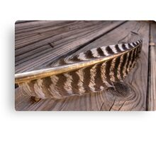 Curve of the Quill Canvas Print