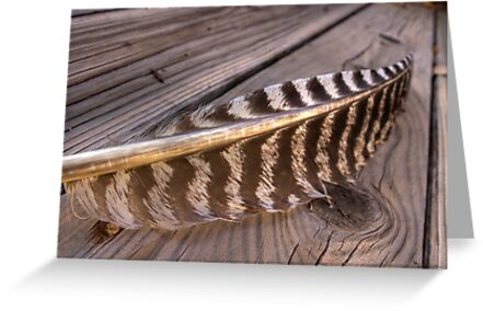 Curve of the Quill by Sue  Cullumber