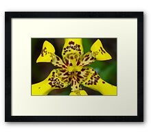 Yellow explosion in macro Framed Print