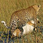 Leopard dragging kill to safe place! by jozi1