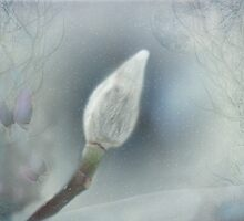 Winter Willow by Judi Taylor
