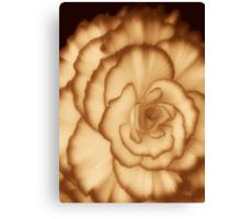 Carmel Cream ©  Canvas Print