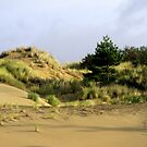 A Tree On A Dune by scenebyawoman