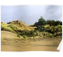 A Tree On A Dune Poster