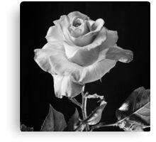 """Baron De Rothschiid"" Rose Canvas Print"