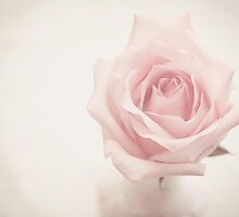 Pink Rose by Awdrey