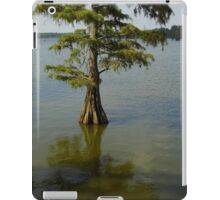 One Cypress Tree iPad Case/Skin