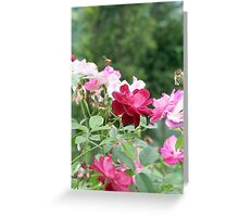 A Rose Bush with Roses and a Bee Greeting Card