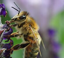 Lavendar Tea For A Bee by MissyD