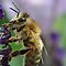 Bee's Voucher/Avatar Challenge