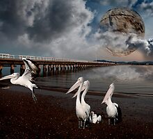pelican island by Axle