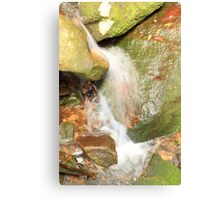 Little Creek - Minnamurra Rainforest Canvas Print