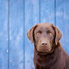 Yellow Brown Blue by { wetnosefotos.com  }