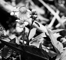 All Alone by satori80