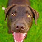 Happiness is . . . by { wetnosefotos.com  }