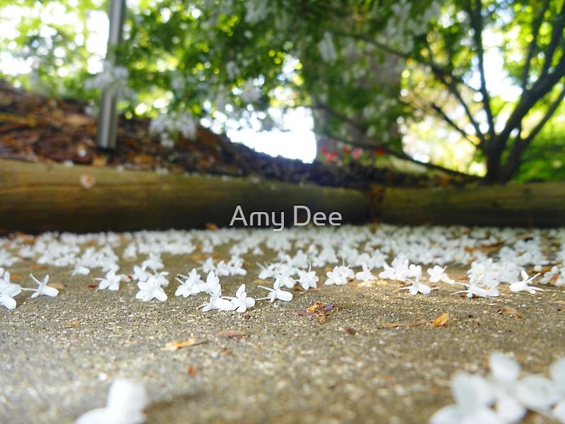 Fallen Flowers by Amy Dee
