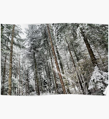 Snowing in the forest Poster
