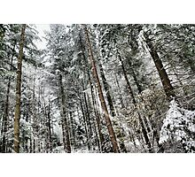 Snowing in the forest Photographic Print