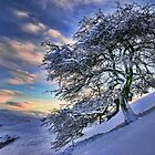 Icy tree by Guy Carpenter