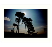 Curragh treescape catchlight Art Print