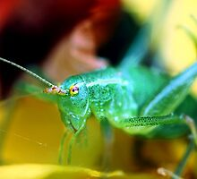 Grasshopper by Innpictime