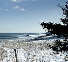Winter Wonderland by NovaScOcean
