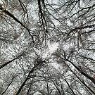 Snowy tree canopy by Guy Carpenter