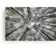 Snowy tree canopy Canvas Print