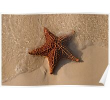 Starfish, Rose Island, Bahamas Poster