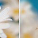 Delicate Denim Daisy Diptytch by Lisa Knechtel