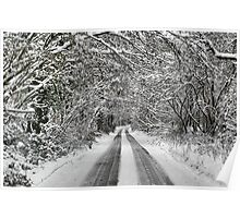 Snowy road under the trees Poster