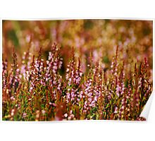 Yorkshire Dales heather Poster